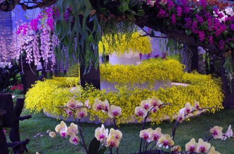 Taiwanese Orchid Festival at The Royal Botanic Gardens Edinburgh