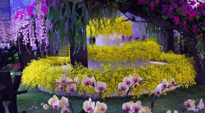 This Weekend – Taiwanese Orchid Fair at the Botanics