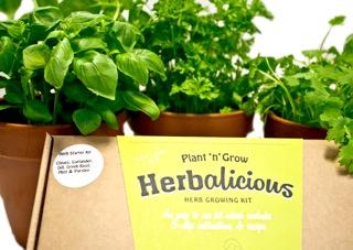 herb starter box (2)