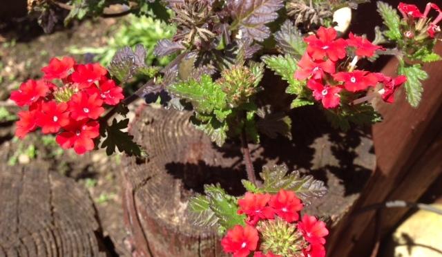 Blissful Pottering in the Garden – Fri 6th June