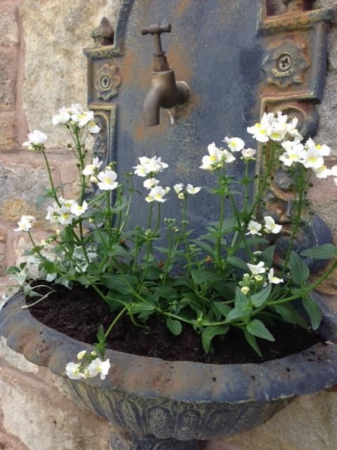 Vanilla Lady & Silver Falls planted