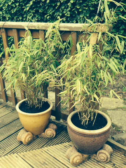 Bamboo plants are now potted