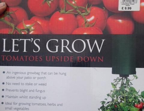 Tomato Disaster at Dusk – Mon 2nd June