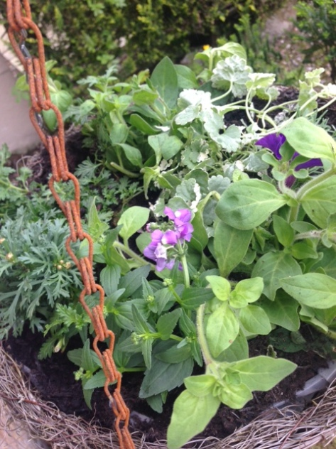 hanging baskets for the front of the house
