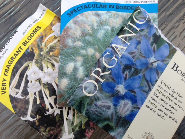 Nicotiana, Ornamental Grass & Borage