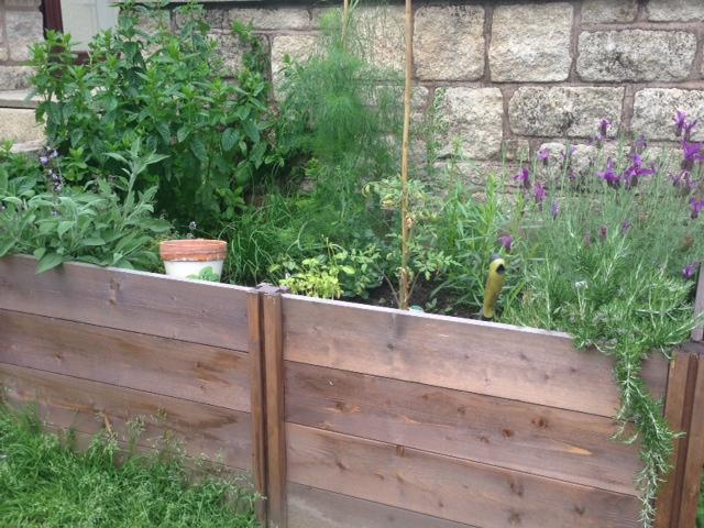 The herb garden before a little re-organisation