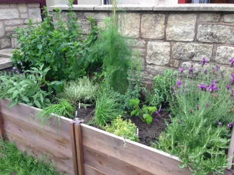 A much tidier herb garden