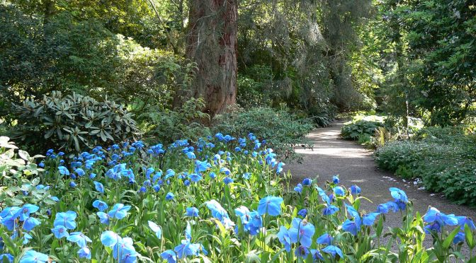Discover Scottish Gardens – this is fantastic!