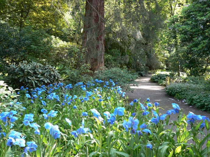Blue at Dawyck Botanic Garden