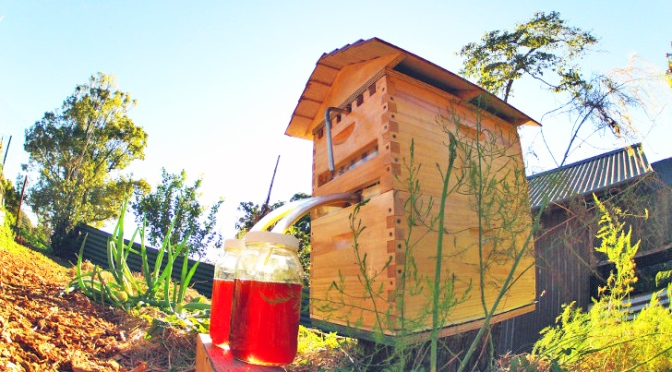 Honey on-tap straight from the hive – this is amazing!