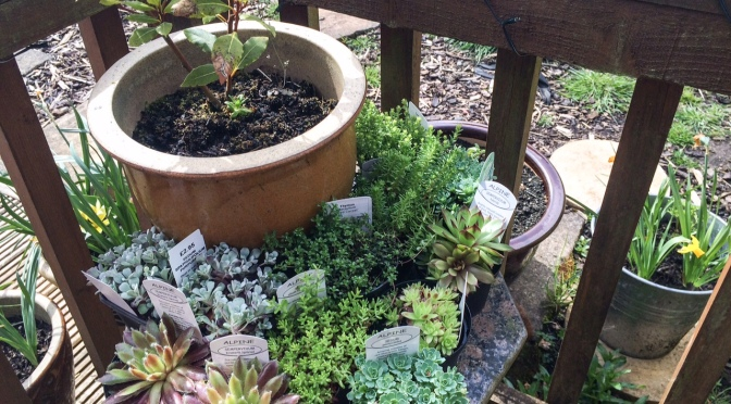 A Planting & Sowing Extravaganza
