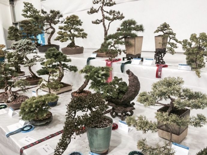 Bonsai heaven