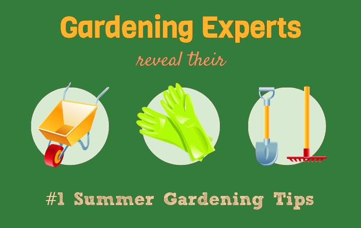 Gardening experts reveal their summer gardening tips a pentland garden diary - Summer time gardening tips ...