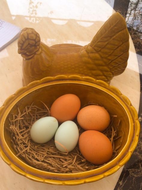 Eins Zwei Ei!