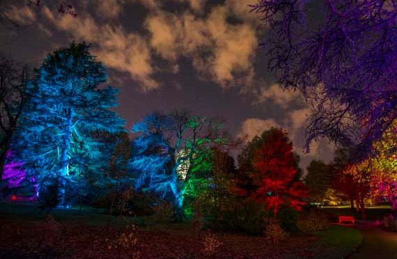Pretty Lights at The Botanics – opens 29th Oct