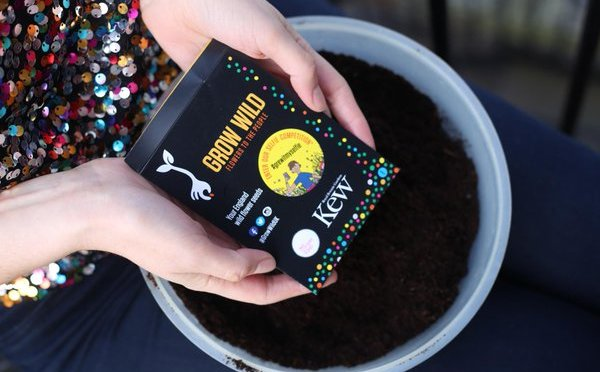 FREE Wildflower seeds from Grow Wild (& WIN a DSLR camera)