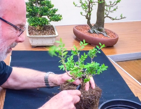 An evening with our local Bonsai Society