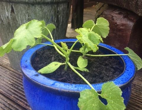 Potting & Planting & Planting & Potting