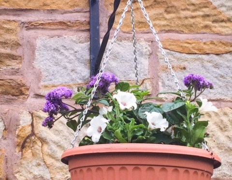 Self-watering Hanging Basket – Review