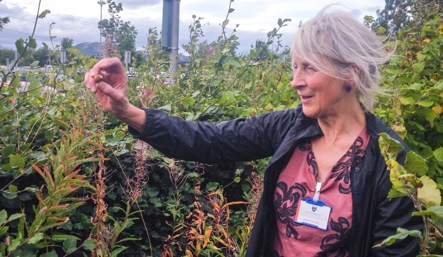 Getting Our Hands Dirty – Foraging and Soil Science