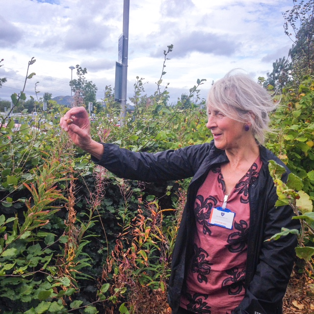Foraging with Fi Martynoga