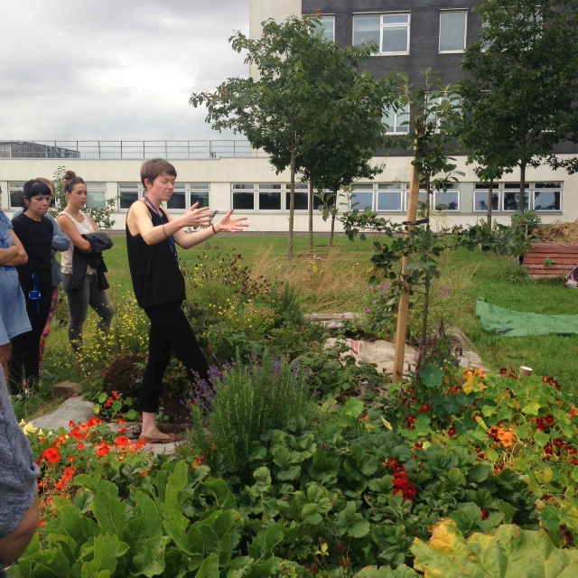 Getting to grips with our campus allotments