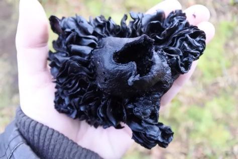 Blackening Brittlegill - Russula Nigricans