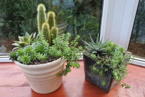 My latest succulent and cacti pots