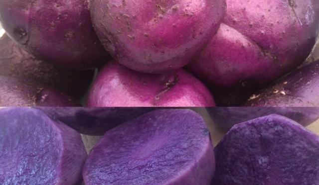 Salad Blue Potato Harvest