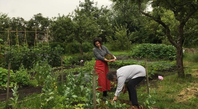 Food Beyond The Plate – Upcoming Workshops