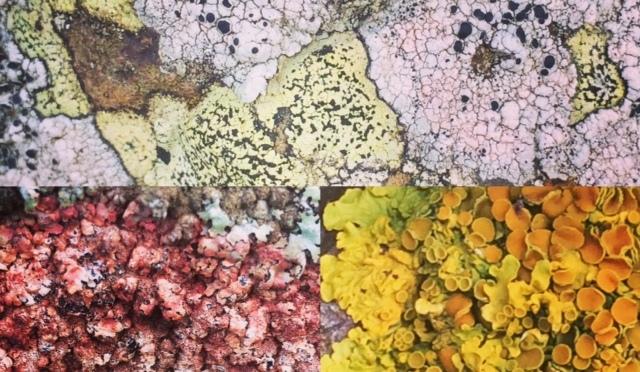 Wordless Wednesday – Beautiful Lichens