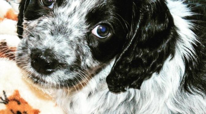 Our new family member…