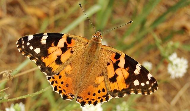 Butterflies, Bees and Birds
