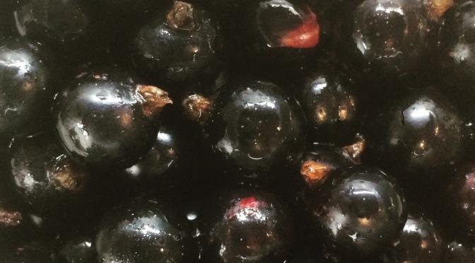 Wordless Wednesday – Blackcurrant Harvest