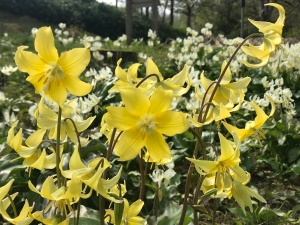 The Explorer's Garden in Pitlochry