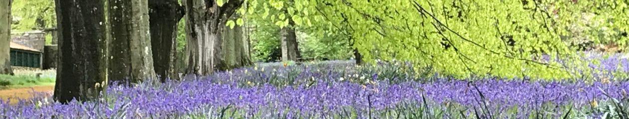 A Pentland Garden Diary
